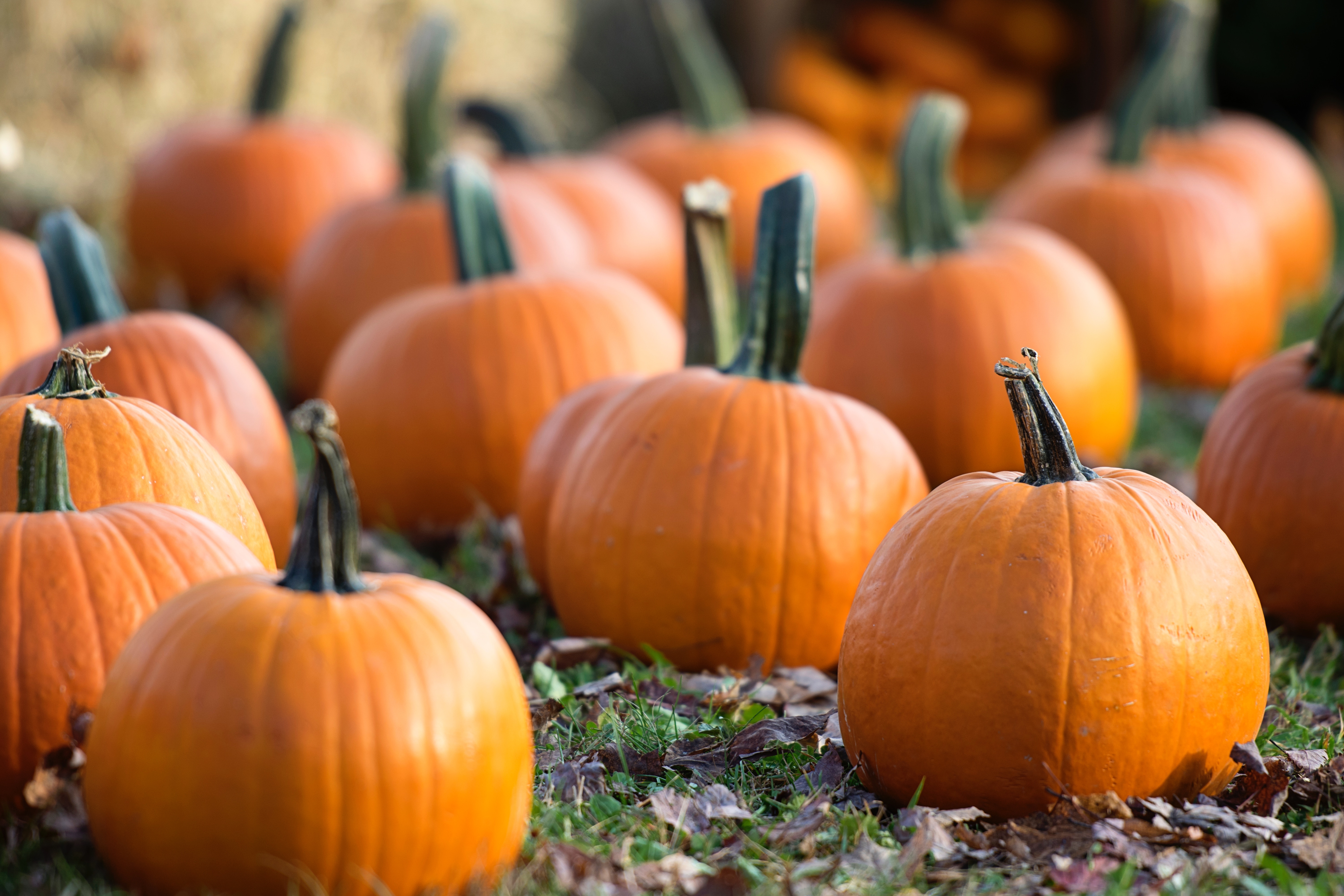 4 Marketing Tips that are Scary Good