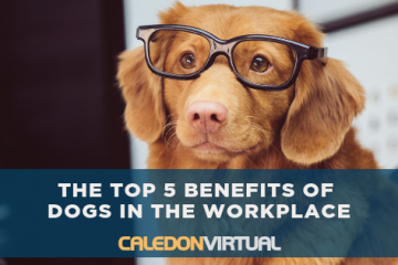 The Top 5 Benefits of Dogs in the Workplace