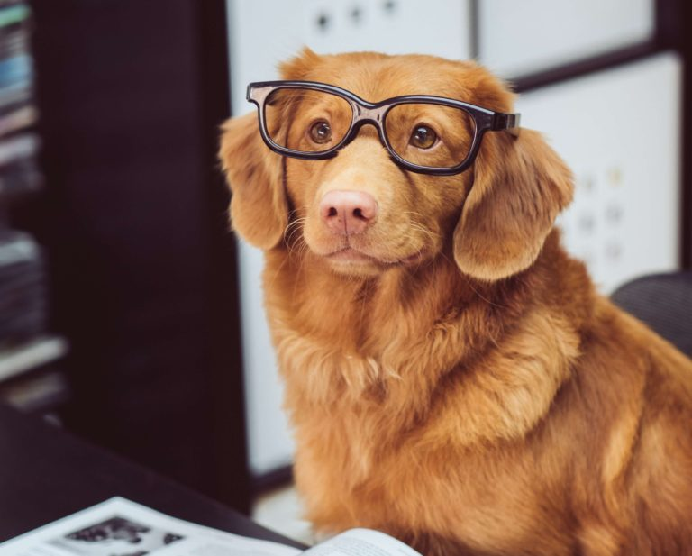 benefits of dogs in the workplace