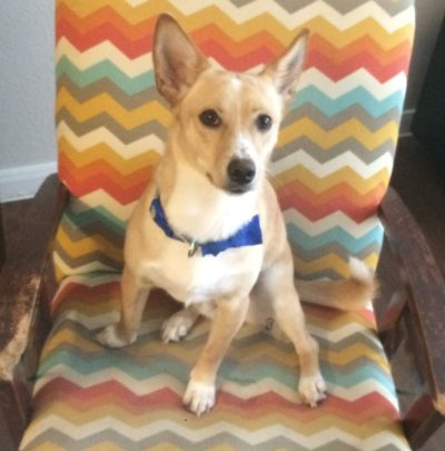 MoJo, a Caledon Canine